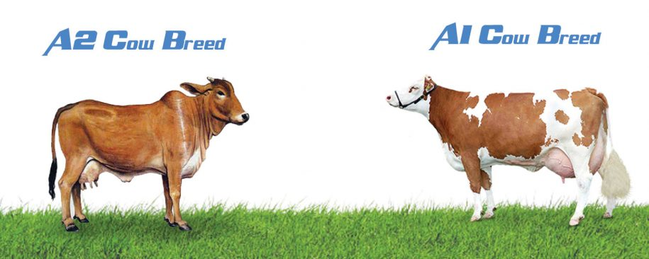 A2 Cow Breeds