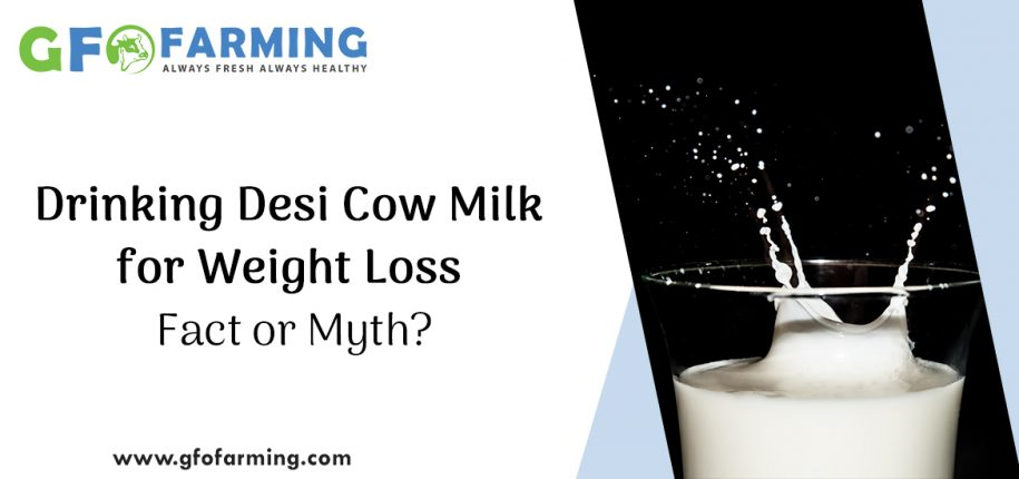 Cow Milk for Weight Loss