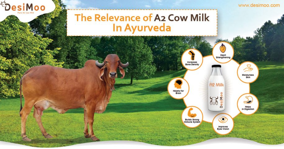 A2 Cow Milk in Gurgaon